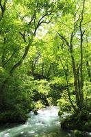 新緑の奥入瀬渓流 11076008612| 写真素材・ストックフォト・画像・イラスト素材|アマナイメージズ