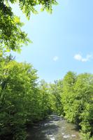 新緑の奥入瀬渓流と青空