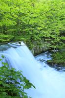新緑の奥入瀬渓流・銚子大滝