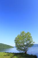 新緑の樹と湖