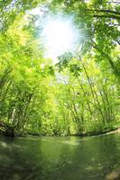 新緑の奥入瀬渓流と太陽