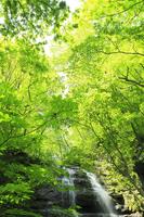 新緑の奥入瀬渓流・九段の滝