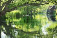 新緑の万水川と水車小屋 11076008738| 写真素材・ストックフォト・画像・イラスト素材|アマナイメージズ