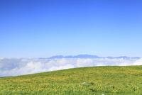 霧ヶ峰高原のニッコウキスゲと中央アルプス
