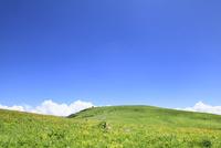 霧ヶ峰高原のニッコウキスゲと車山