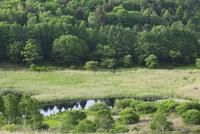 霧ヶ峰高原 新緑の池のくるみ湿原とレンゲツツジ