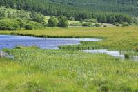 八島湿原の鎌池 11076008783| 写真素材・ストックフォト・画像・イラスト素材|アマナイメージズ