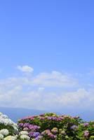 アジサイの花と青空 11076008857| 写真素材・ストックフォト・画像・イラスト素材|アマナイメージズ