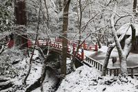 雪景色の奈良公園 水谷橋と鹿