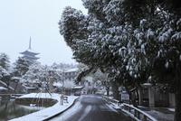 雪景色の奈良公園 猿沢池と興福寺五重塔