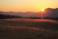 曽爾高原のススキと夕日 11076009153| 写真素材・ストックフォト・画像・イラスト素材|アマナイメージズ