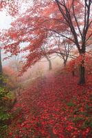 鳥見山の紅葉 11076009160  写真素材・ストックフォト・画像・イラスト素材 アマナイメージズ