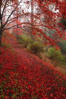 鳥見山の紅葉 11076009162  写真素材・ストックフォト・画像・イラスト素材 アマナイメージズ