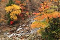 旧行者還林道 川迫川渓谷の紅葉  11076009201  写真素材・ストックフォト・画像・イラスト素材 アマナイメージズ