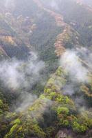 旧行者還林道の新緑とヤマザクラ ナメゴ谷