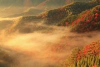 雲海景勝地の雲海と朝焼け
