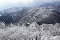 高見山の樹氷 台高山脈