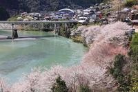 折立の桜と十津川
