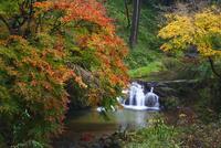 飛鳥川の紅葉
