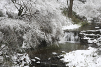 飛鳥川の雪景色 11076009288| 写真素材・ストックフォト・画像・イラスト素材|アマナイメージズ