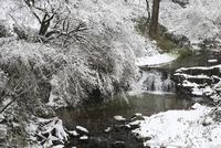 飛鳥川の雪景色