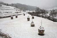 稲渕の棚田の雪景色