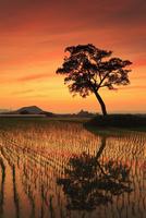 古宮土壇 夕焼けに染まる棚田と畝傍山