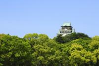大阪城の新緑 11076009314| 写真素材・ストックフォト・画像・イラスト素材|アマナイメージズ
