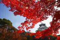 大阪城天守閣とカエデの紅葉