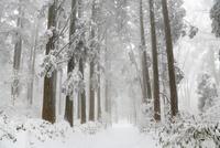 金剛山の樹氷と登山道 11076009324| 写真素材・ストックフォト・画像・イラスト素材|アマナイメージズ