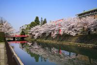 岡崎疎水 慶流橋とサクラ 11076009340| 写真素材・ストックフォト・画像・イラスト素材|アマナイメージズ