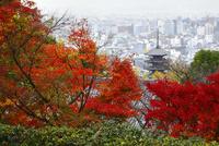 八坂の塔と紅葉 京都市街