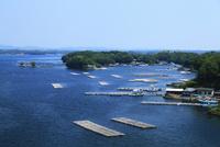 志摩半島の和具浦 真珠養殖場
