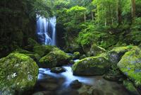 桑の木の滝とイワツツジ