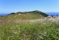 生石高原のススキ 11076009488| 写真素材・ストックフォト・画像・イラスト素材|アマナイメージズ