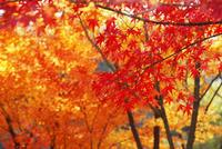 和歌山城の紅葉