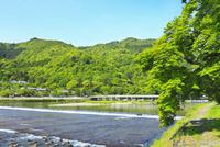新緑の嵐山・渡月橋