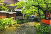 新緑の祇園白川