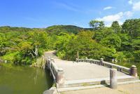 緑の円山公園