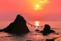 夫婦岩と朝日 二見浦 11076009818  写真素材・ストックフォト・画像・イラスト素材 アマナイメージズ