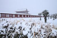 雪の大極殿 平城京跡