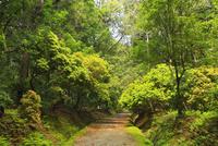 ささやきの小径 奈良公園
