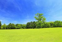 緑の奈良公園