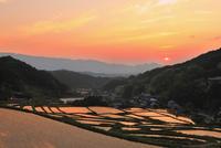 細川の棚田 夕日