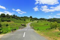 稲渕の棚田と道