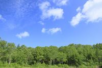 新緑の木々と白雲