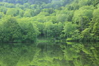 志賀高原 新緑の長池