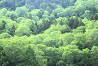 新緑の樹林