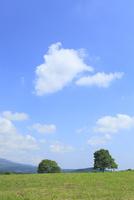 緑樹と青空
