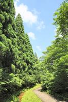 緑の樹林と小道
